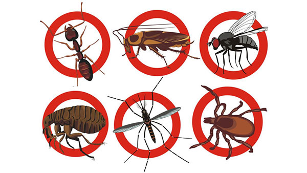 Những cách đuổi diệt côn trùng trong nhà đơn giản nhất